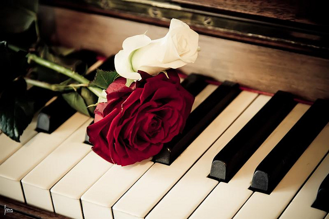 Rose Piano Wallpaper Hd Download